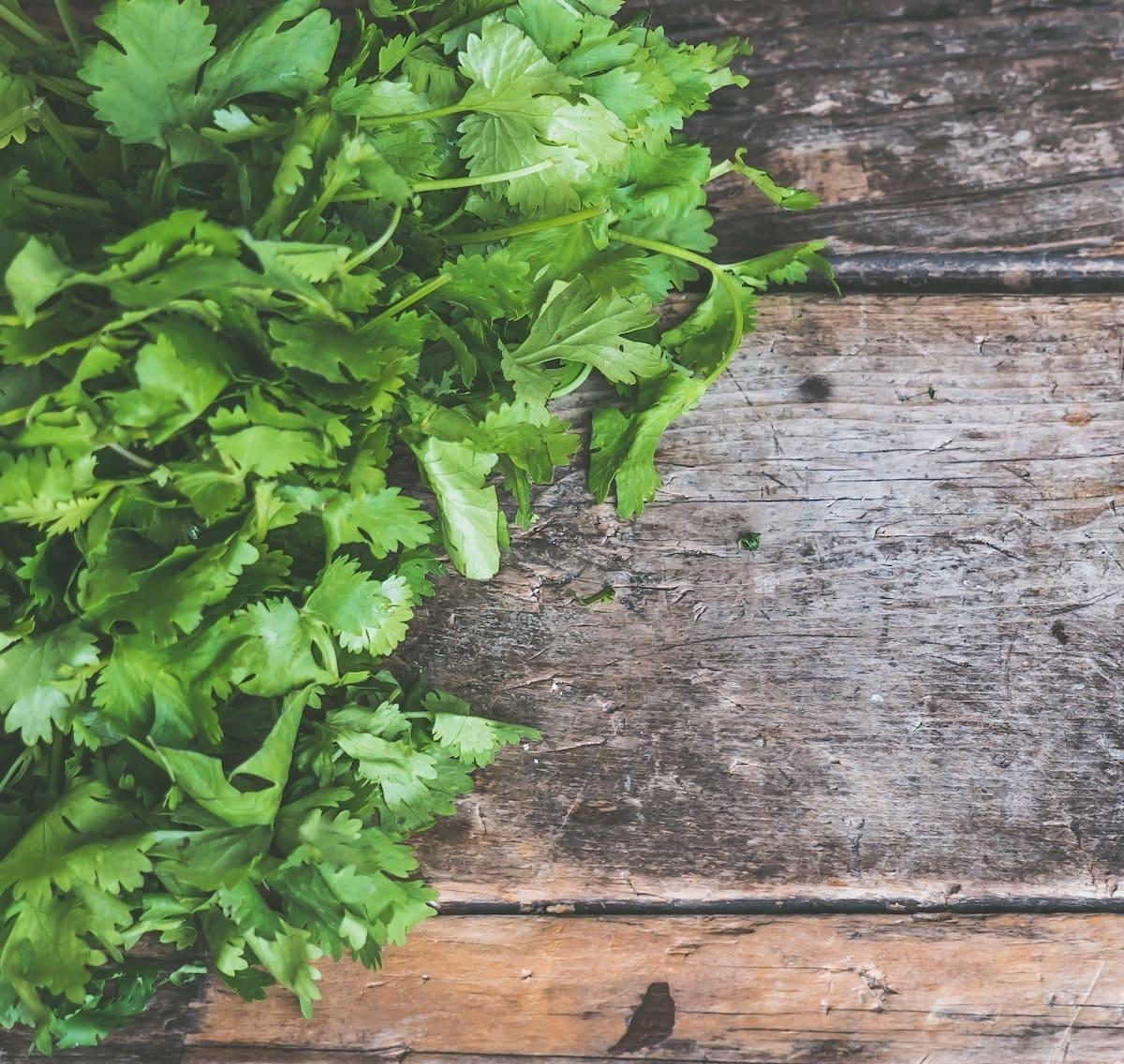 Grüne Koriander-Blätter liegen auf einem Holztisch